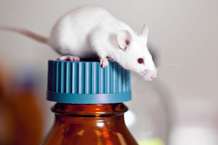 mouse_cap